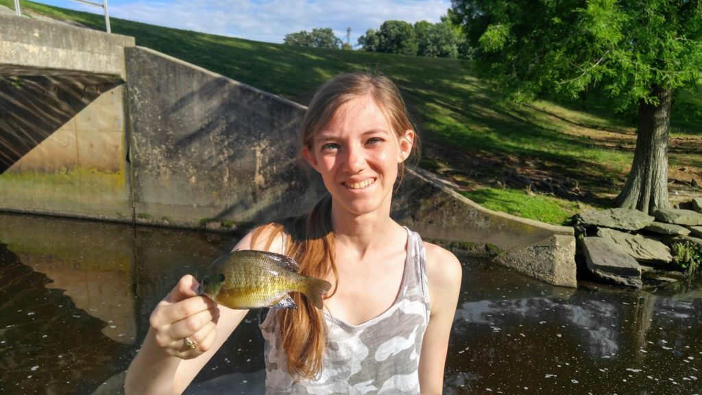 All About Bluegill