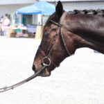 The 2018 Standardbred Makeover hosted by Horse Lovers United, Inc.